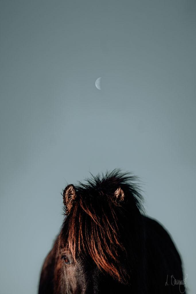Islandpferd mit Mond